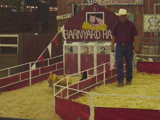 Chicken race at the LA County Fair.